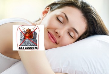 How to cure bed bug bites? Find out here