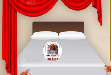 Eight Ways on How to Prevent Bed Bugs